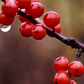 Berries With Water Droplets by Tony Ramos
