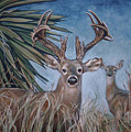 Berry Buck And Doe by Diann Baggett