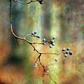Berry Shadows 7920 Idp_2 by Steven Ward