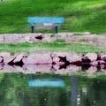 Beside Still Waters by Kim Blaylock