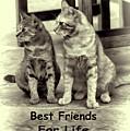 Best Friends For Life by Pamela Walton