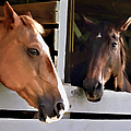 Best Friends Horse Chat by Sandi OReilly
