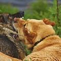 Best Friends by Lori Mahaffey