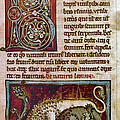 Bestiary: Lion by Granger