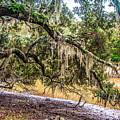 Bethany Cemetery Oaks And Tidal Creek by Yvette Wilson