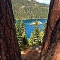 Between The Pines by Krissy Katsimbras
