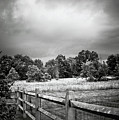 Between Two Neighbors by Trish Tritz