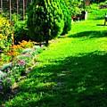 Beutifull Garden by Filip Mazev