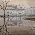 Bewitching Detritus by Jim Cook