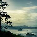 Beyond The Overlook Tree by Don Schwartz