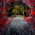 Beyond The Red Leaves by Tara Turner