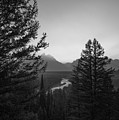 Beyond The Trees Bw by Michael Ver Sprill