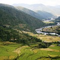 Bhutan Rice Fields by Linda Russell