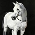 Bianco Su Nero by Danka Weitzen