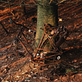 Bicycle Abandoned In A Forest by Bernard Jaubert
