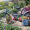 Bicycle by Wendy Fox