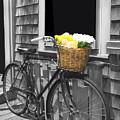 Bicycle With Flower Basket by Carlos Diaz