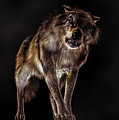 Big Bad Wolf by Daniel Eskridge