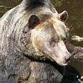 Big Bear by Diane Berard