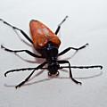 Big Beetle by Douglas Barnett
