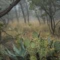 Big Bend Fog On Lost Mines Trail by Saundra Salter