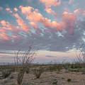 Big Bend Sunrise-blooming Ocotillo by Richard Sandford