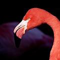 Big Bird by Bob Snell