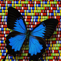 Big Blue Butterfly by Garry Gay