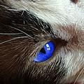Big Blue Eyes Cat by Kathy Barney