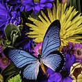 Big Blue Wings by Garry Gay