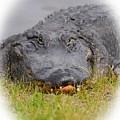 Big Boy Gator 2 by Sheri McLeroy