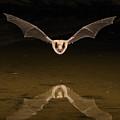 Big Brown Bat Reflection by Scott  Linstead