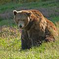Big Brown Bear by Andrew Kazmierski
