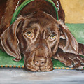 Big Brown Dog by Laura Bolle