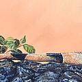 Big Bubba Iguana by Monika Brauer