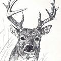 Big Buck by Debra Sandstrom