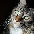 Big Cat In The Sun by Jeffrey Ehninger