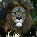 Big Cats 79 by Ben Yassa