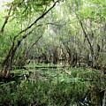 Big Cypress Preserve by Barbara Bowen