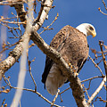 Big Eagle by Linda Kerkau