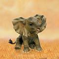 Beautiful African Baby Elephant by Glenn Holbrook