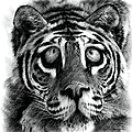 Big Eye Tiger by Artful Oasis