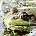 Big Eyed Frog In A Marsh by DejaVu Designs