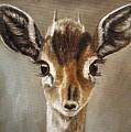 Big Eyes Dik-dik by Angeles M Pomata