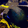 Big Fish by David Lee Thompson