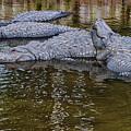 Big Gators by Jim Thompson