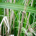 Big Grass Blade by Amy Turner