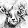 Big Horn Sheep by Marilyn Barton