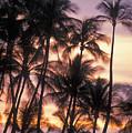 Big Island Palms by Greg Vaughn - Printscapes