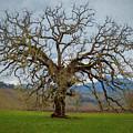 Big Oak by Mike Penney